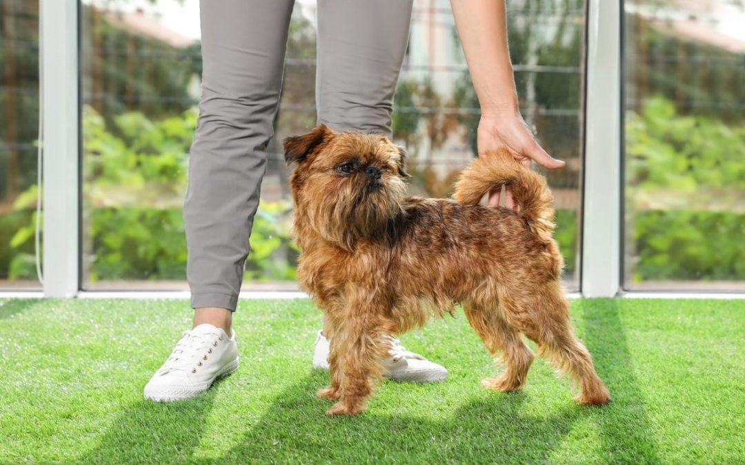 Amazing Health Benefits of Pet-Friendly Artificial Turf for Pets in Seattle