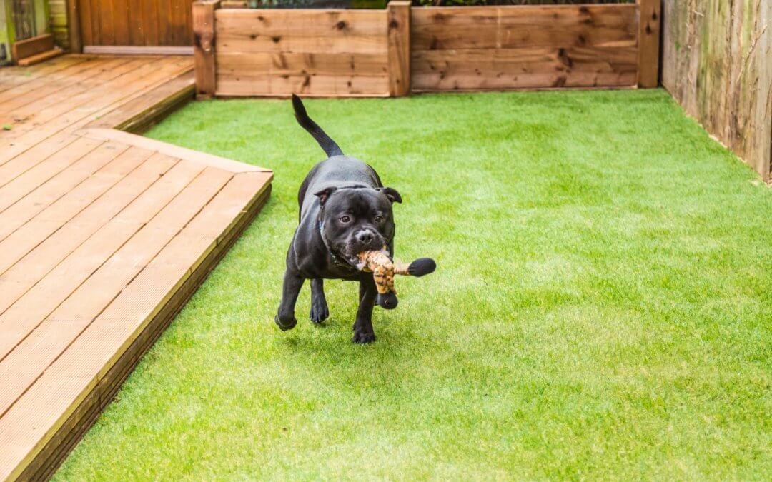 Pet Friendly Lawn Ideas Using Artificial Turf for Pets in Seattle